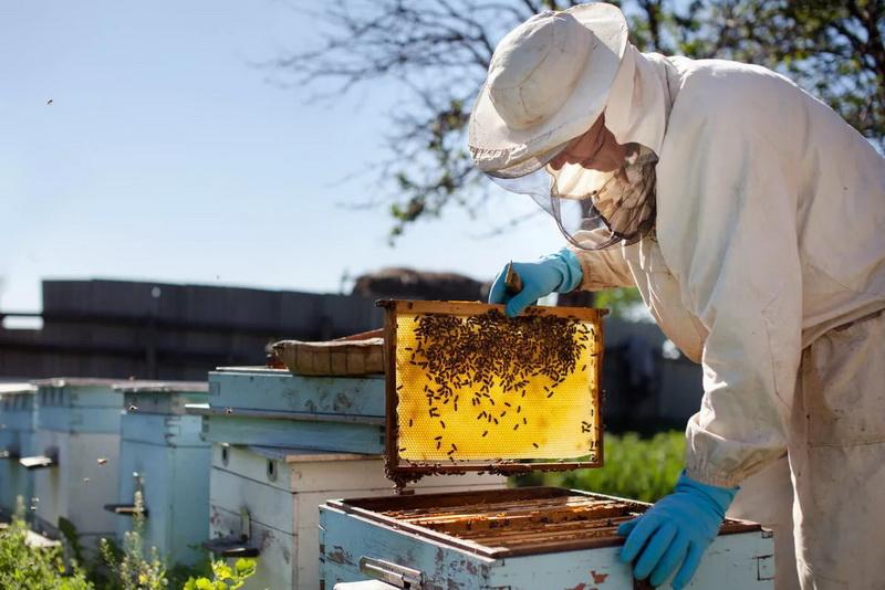 Мёд в сотах на полурамке