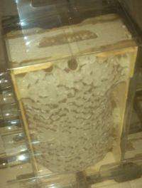 Секция мёда в сотах